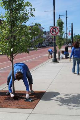 Homestead team members replacing mulch for trees in downtown Albion.
