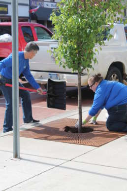 Two members of the the Homestead team adding fresh mulch to a tree in downtown Albion.