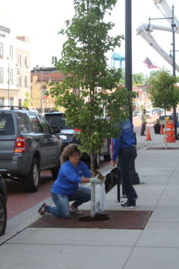 Two members of the Homestead team replacing mulch for a tree in downtown Albion.