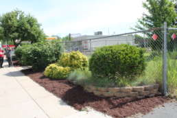 A freshly mulched garden of bushes.